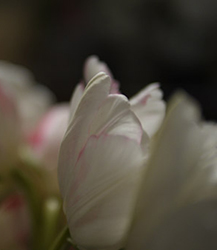 FlowersForUs-mai-hua-217